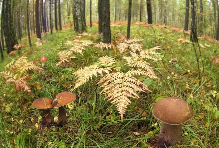 где собирать грибы 1.jpg