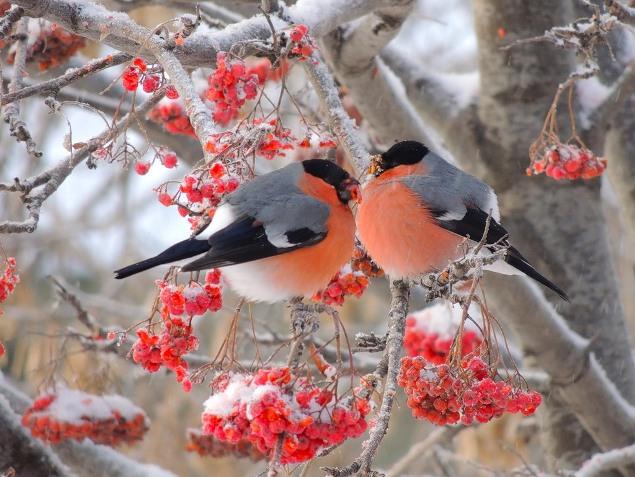 Народные приметы по животным, птицам, растениям